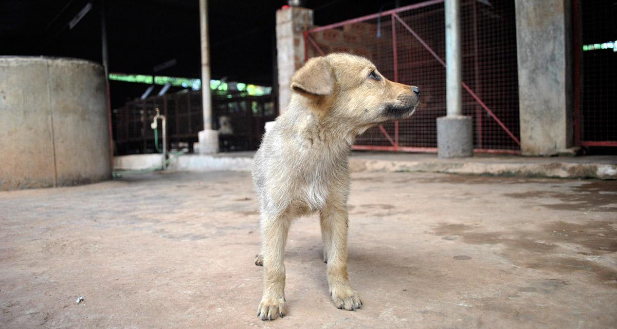 dog-pfa
